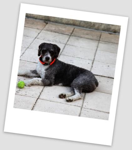 Jules de hond op Le Manoir in Souillac