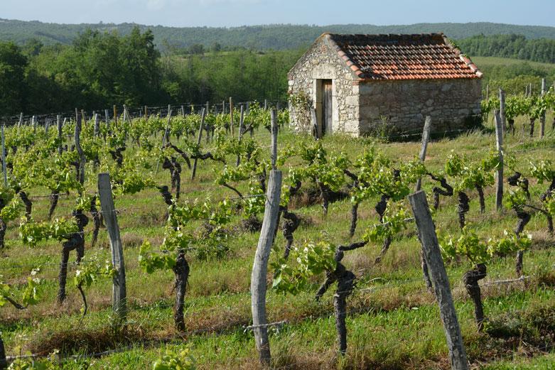 wijngaarden in Cahors