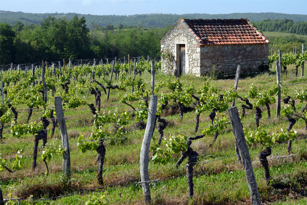 vineyards of cahors